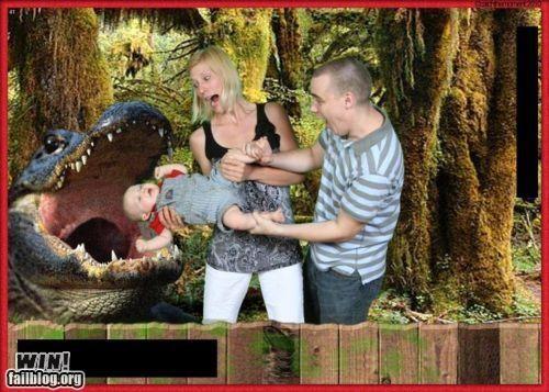 alligator,baby,family,Photo