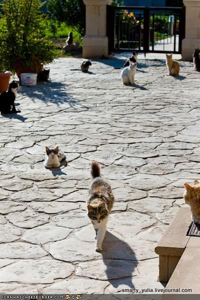 O, The Places You'll Go: The Holy Monastery of Saint Nicholas of the Cats