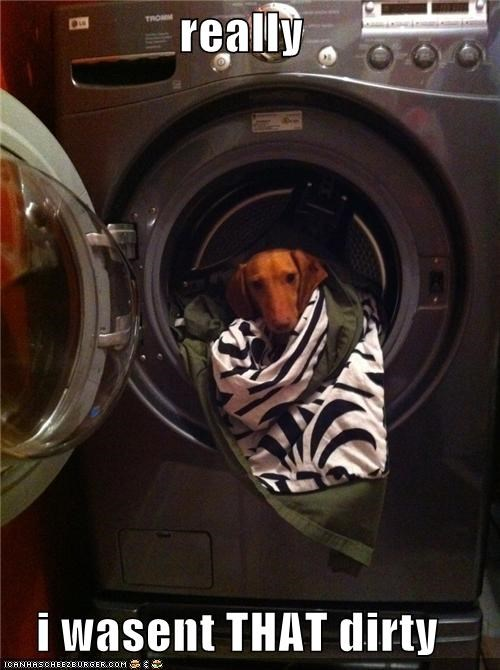 confused,dachshund,dirty,not that,really,upset,was not,washer,washing machine