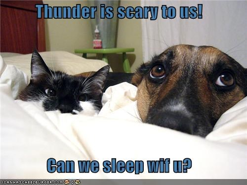 afraid,anatolian shepherd,asking,bed,cat,cuddling,fear,human,question,scared,scary,sleep,thunder,with