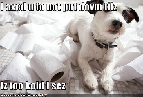 I axed u to not put down tilz  Iz too kold I sez