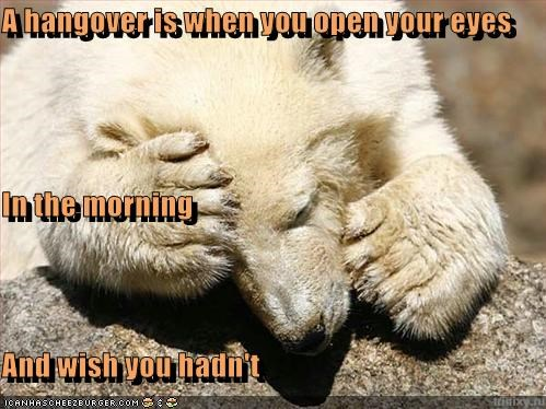 bear,caption,captioned,definition,eyes,had not,hangover,morning,open,polar bear,regret,wish
