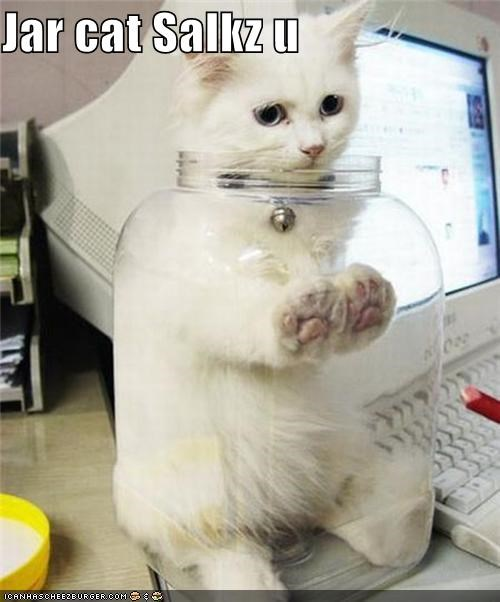 Jar cat Salkz u