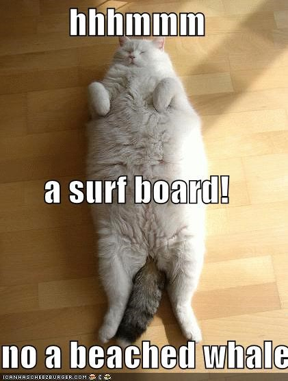 hhhmmm a surf board! no a beached whale