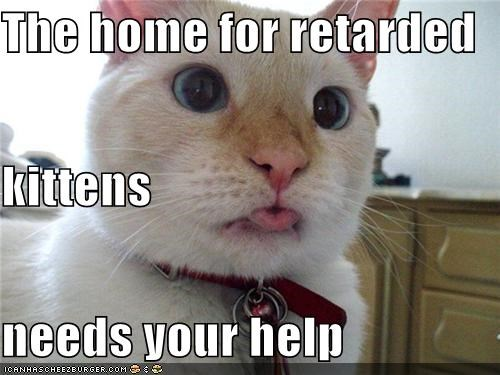 The home for retarded  kittens needs your help