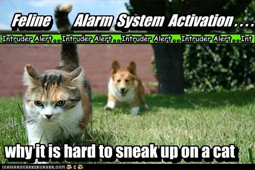 activation,alarm,cat,corgi,difficult,explanation,FAIL,feline,reason,sneaking,system,why