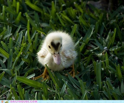 baby,duck,duckling,head,headache,heart,heart-shaped,heartthrob,massage,offer,pun,throb,throbbing
