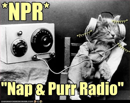 abbreviation,black and white,caption,captioned,cat,headphones,kitten,listening,nap,NPR,purr,radio,sleeping