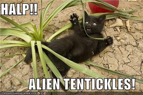 afraid,alien,caption,captioned,cat,halp,help,kitten,leaves,plant,tentacles