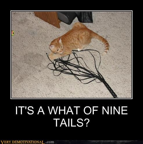 IT'S A WHAT OF NINE TAILS?