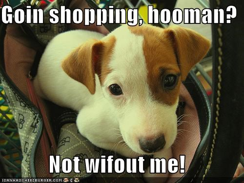 Goin shopping, hooman?  Not wifout me!
