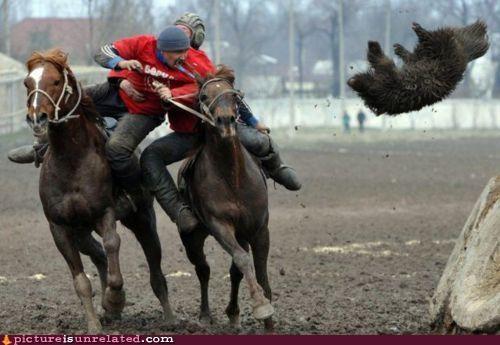 animal-non-human,creepy,horses,wtf