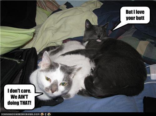 Kitties trying new thing.