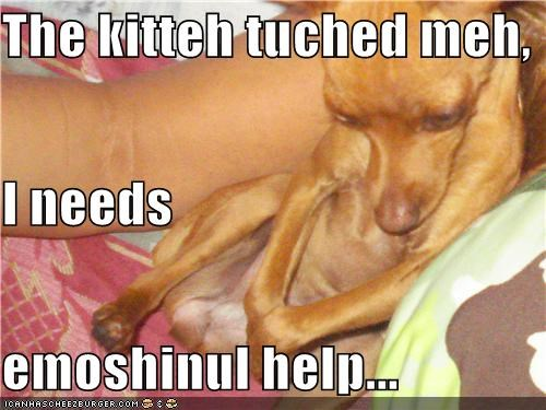 The kitteh tuched meh, I needs emoshinul help...