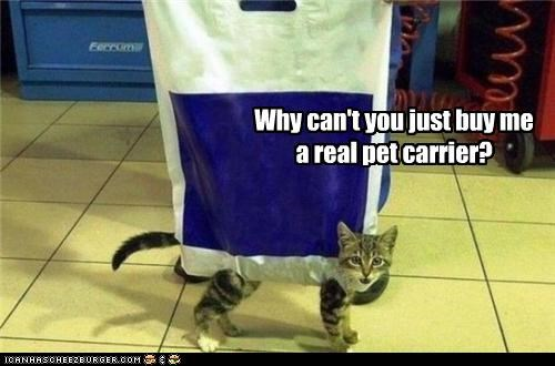 Why can't you just buy me a real pet carrier?