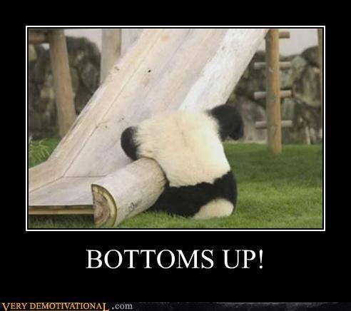 hilarious,panda,slide,upside down