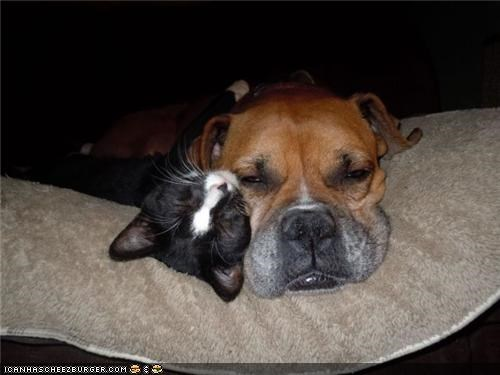 Goggies R Owr Friends: Iz Willing 2 Share Mah Pillow 'Cuz Ai Lubz U