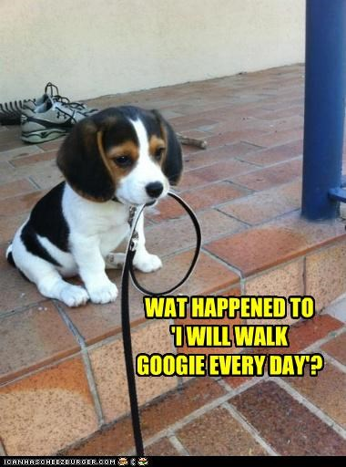 WAT HAPPENED TO 'I WILL WALK GOOGIE EVERY DAY'?