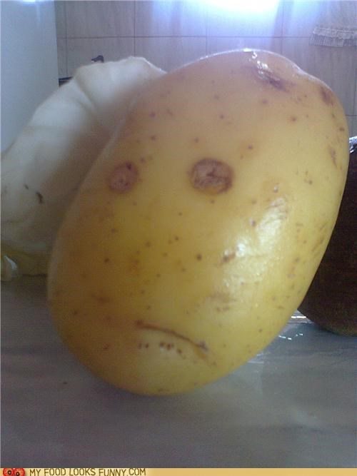 Wary Potato is Wary
