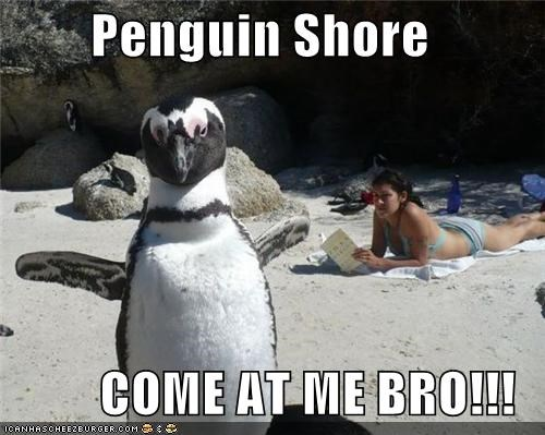 Penguin Shore  COME AT ME BRO!!!