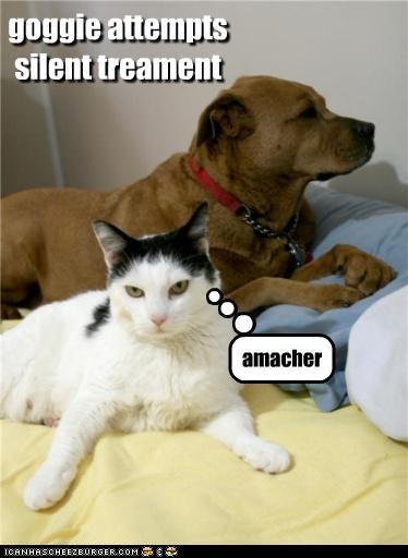amateur,attempting,cat,silent,silent treatment,treatment,whatbreed