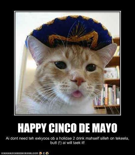 animated gifs,celebrate,cinco de mayo,drinking,drunk,gifs,hats,holidays,sombrero,Video