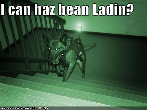 I can haz bean Ladin?