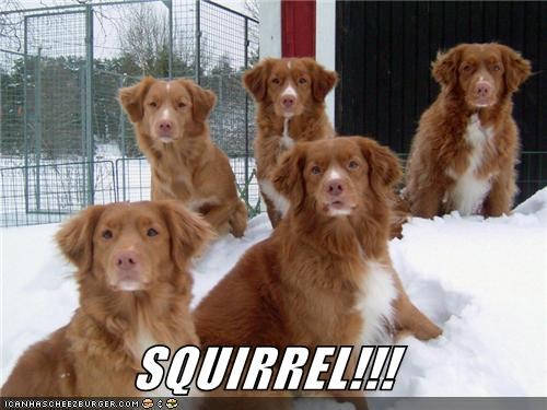 SQUIRREL!!!