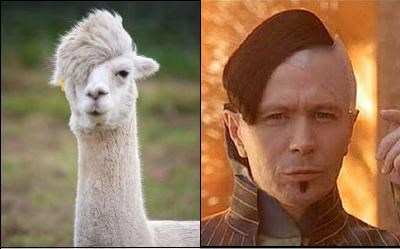 actors,alpaca,animals,Gary Oldman,movies,the fifth element,zorg
