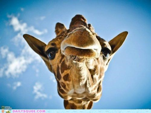acting like animals,adage,baby,dinner,do want,epic,giraffes,ice cream,pout,pouting,tactic,tantrum,upset,when in doubt