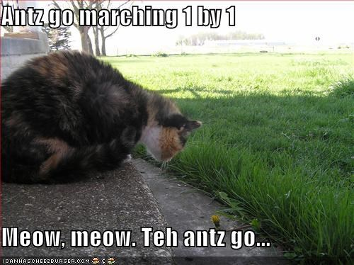 Antz go marching 1 by 1  Meow, meow. Teh antz go...