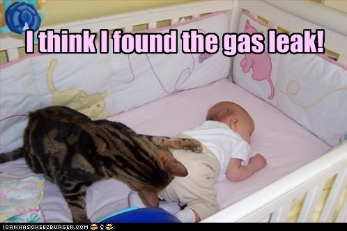baby,caption,captioned,cat,checking,diaper,double meaning,found,gas,human,leak,think