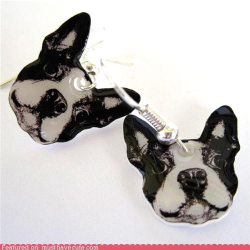 accessories,boston terrier,dogs,earrings,Jewelry,Photo