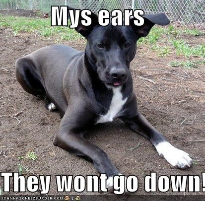 Mys ears  They wont go down!!!!