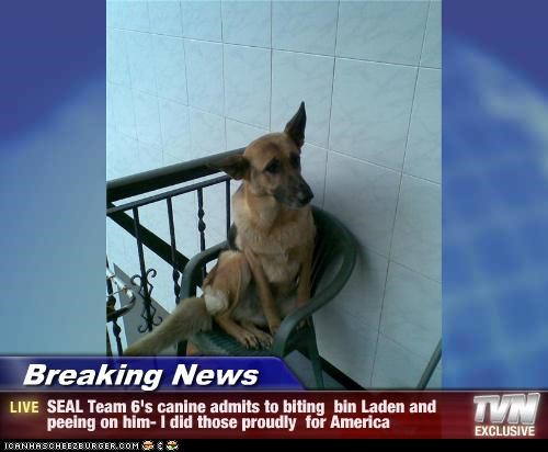 Breaking News - SEAL Team 6's canine admits to biting  bin Laden and peeing on him- I did those proudly  for America