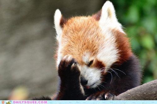 acting like animals,ashamed,embarrassed,explaining,explanation,face,facepalm,palm,red panda,upset