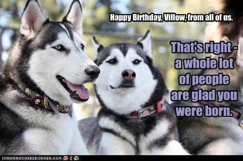 Happy Birthday, Villow, from all of us.