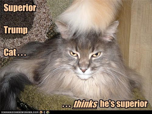 caption,captioned,cat,donald trump,ego,pretentious,superior,thinking,trump