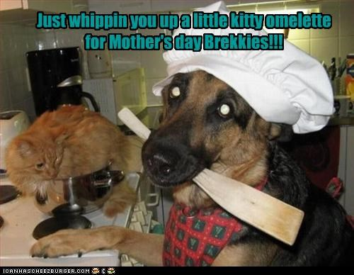 Just whippin you up a little kitty omelette for Mother's day Brekkies!!!