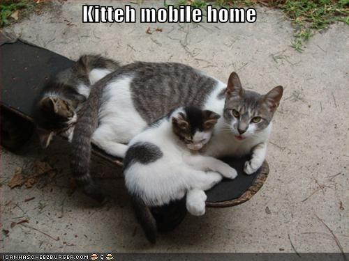 Kitteh mobile home