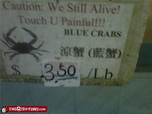 crab,food,pinch
