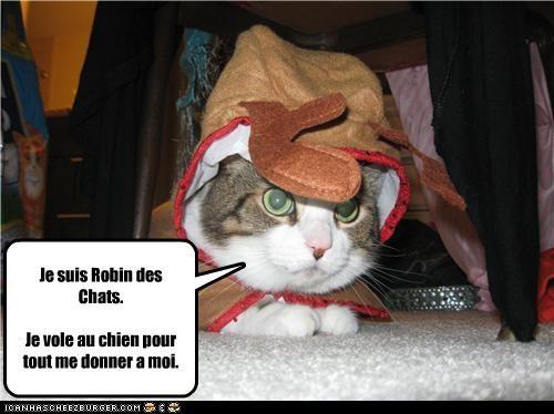 Je suis Robin des Chats.  Je vole au chien pour tout me donner a moi.