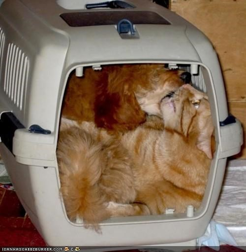 carrier,close quarters,dogs,get it off,goggies,goggies r owr friends,Interspecies Love,stuck,together,too close