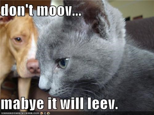 don't moov...  mabye it will leev.
