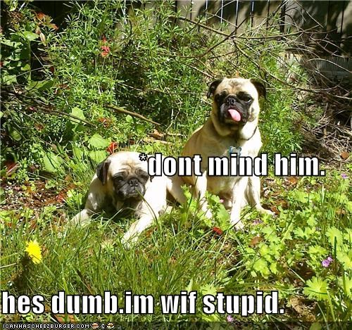 *dont mind him. hes dumb.im wif stupid.