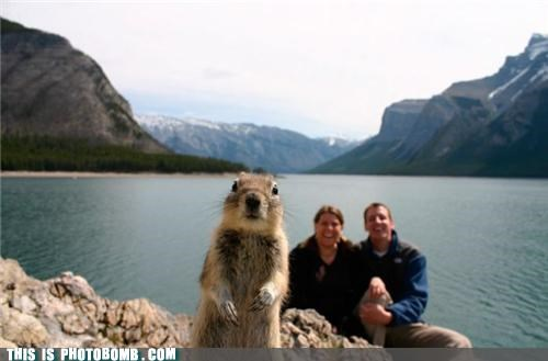 Serious Squirrel Disapproves of Your Awkward Couple Photo