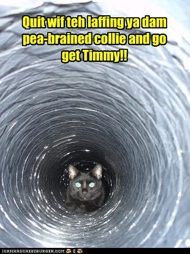 Quit wif teh laffing ya dam pea-brained collie and go get Timmy!!