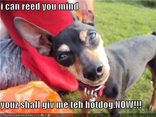 i can reed you mind  youz shall giv me teh hotdog.NOW!!!