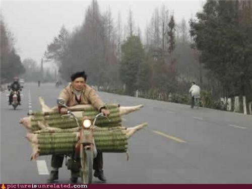 bike,good idea,pig,wtf