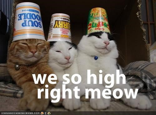 best of the week,caption,captioned,drugs,food,Hall of Fame,hats,high,I Can Has Cheezburger,meow,puns,silly